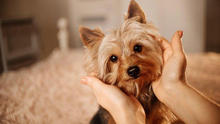 『甘えん坊』が多いと言われている犬種5選