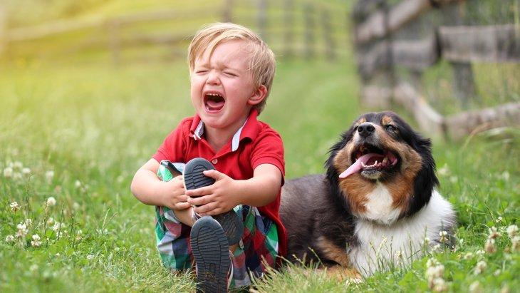犬も家族ロスになる!遺されたわんちゃんの気持ちを理解してあげてください。