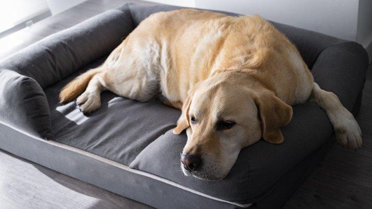 犬は室内で放し飼いするべき?何に注意すればいいの?