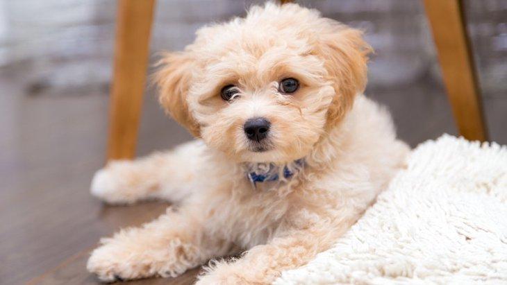 小型犬と大型犬、どっちが飼いやすい?それぞれの生活の違いや考え方