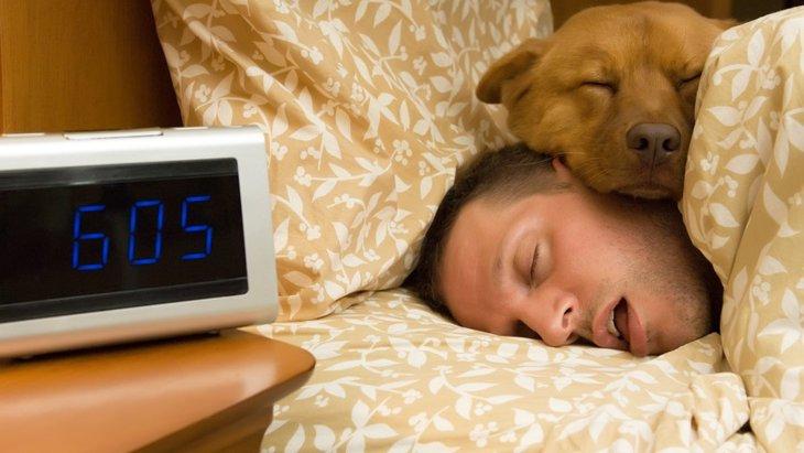 犬が飼い主の頭の上あたりで寝る心理4つ