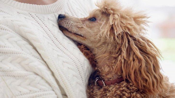 犬が『人にスリスリ』する時の心理4選