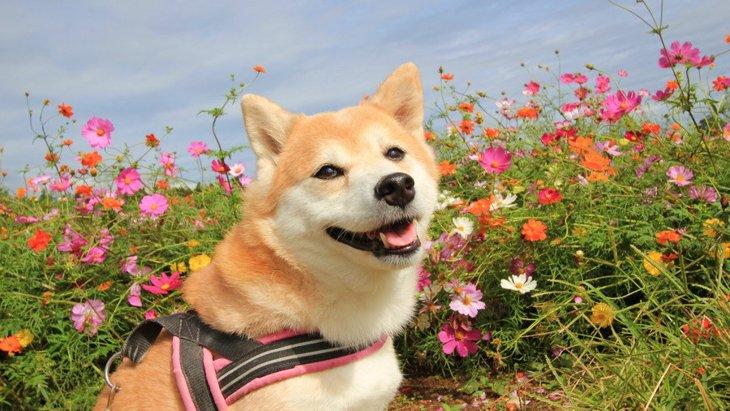 犬が人間に与えてくれる素晴らしい感情5つ