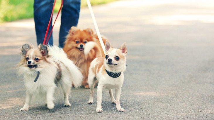 犬のリードの種類4選!それぞれのメリットとデメリット