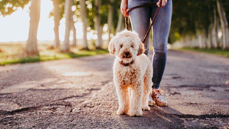 観察してみよう!犬の歩き方別の心理5つ