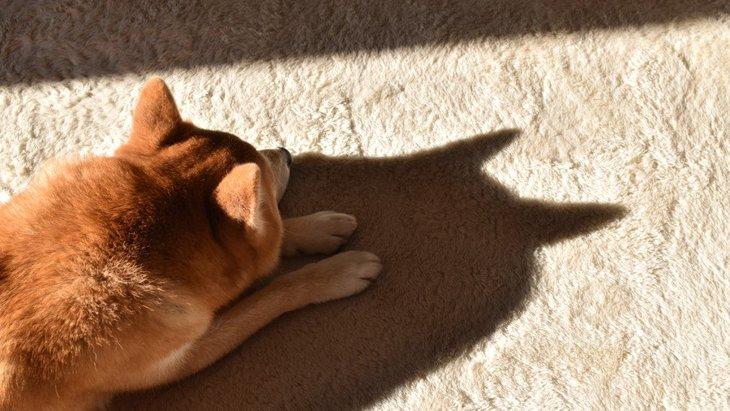 犬は家の中でどんな場所を好むの?よくいる3つの場所