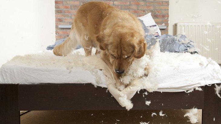 犬が突然狂ったように暴れだす心理2つ!もしかしたら病気の可能性も…?
