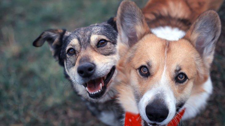 犬が飼い主を『助けたい!』と思っている時の仕草や行動3選