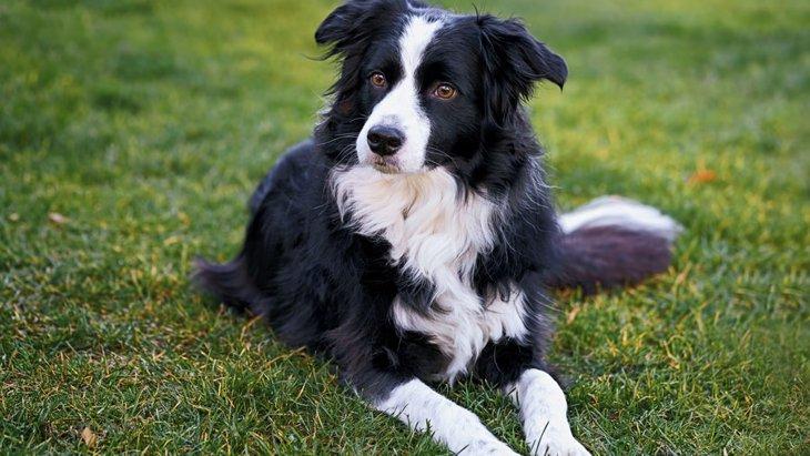 イギリスで生まれた犬種6選