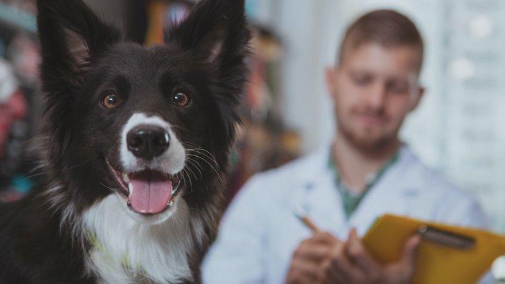 アメリカにて、将来の治療のための犬の幹細胞を保管しておく会社が登場!