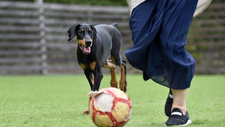 犬を最高に喜ばせる方法5選!普段から愛情を与えるよう意識しよう