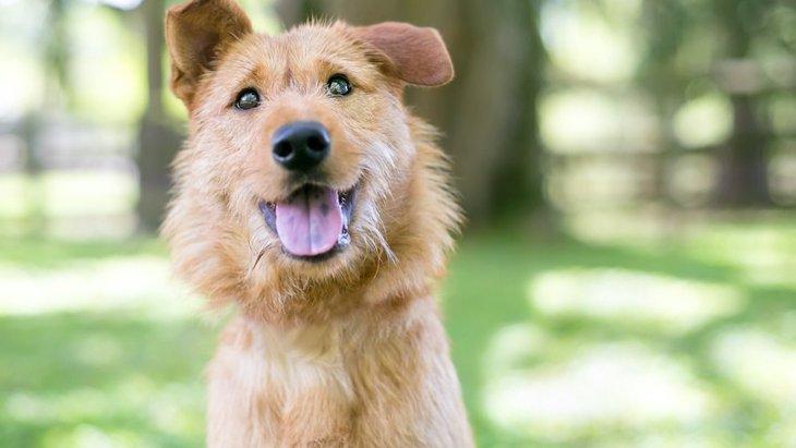 犬を飼うと起こる4つのこと!メリット・デメリットを徹底解説