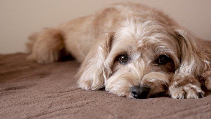 犬が飼い主に『ごめんね』と言っている時にする仕草や態度4選