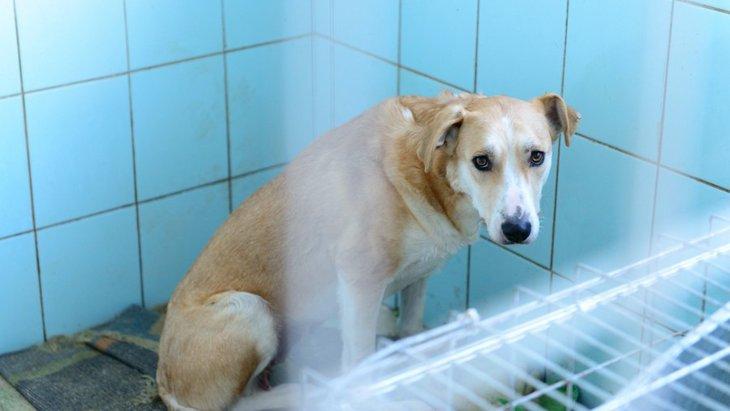 保健所から犬を引き取る際の手順や方法について