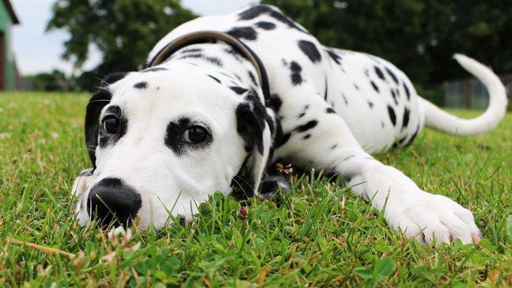 犬が突然動かなくなる心理5選!散歩中に固まったりするのはなぜ?