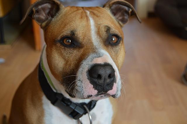 『かませ犬』として虐待されながらも、優しさを失わなかった犬のお話