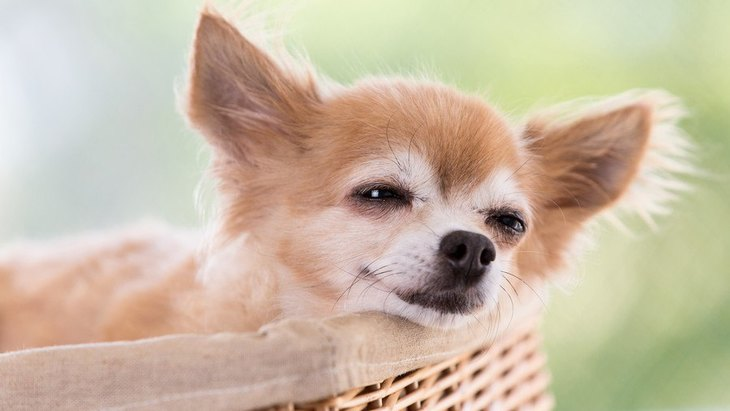 愛犬の表情から読み取ることができる『5つの気持ち』