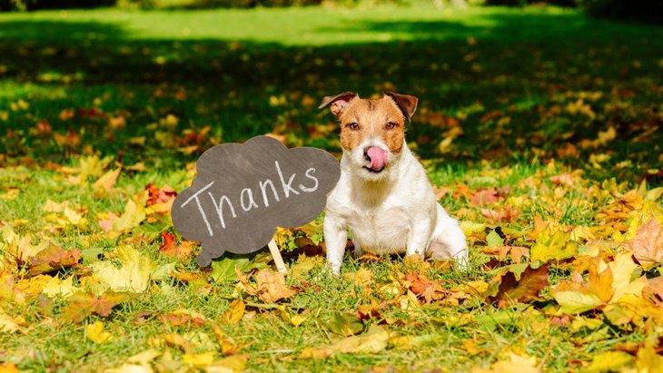 犬があなたにしている『感謝のサイン』4選