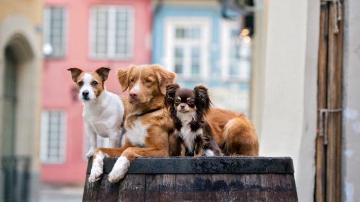 犬は自分の体のサイズを認知しているだろうか?という実験結果