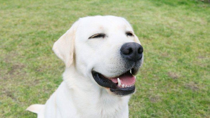 『優しい性格を持つ犬種』5選