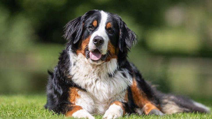 英国で犬の股関節と肘関節形成不全が減少している理由とは?