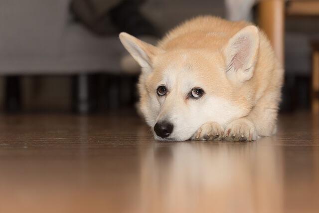 犬のしつけ~罰を使ってしつけるより褒めてしつける方がいいとされる理由~
