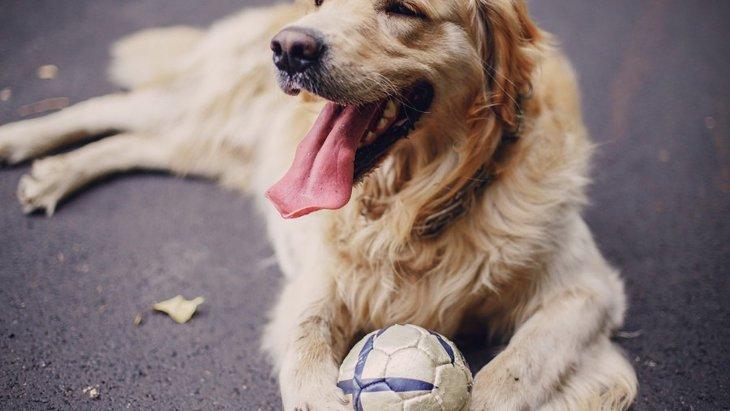 犬用ボール人気ランキングBEST5!お気に入りのものを見つけよう♪