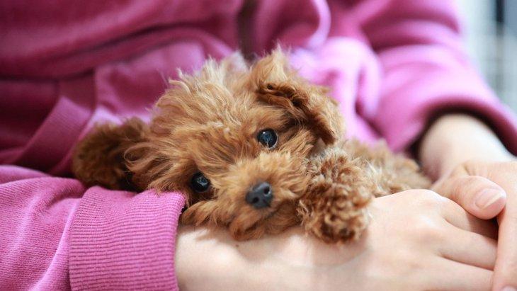 すりすり♡犬が飼い主から離れたくない3つの心理