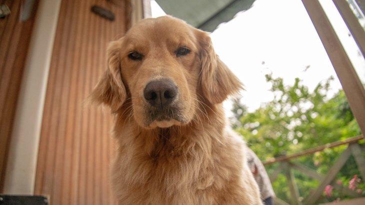 犬との暮らしが辛い?ノイローゼになる人が持つ共通点4つ