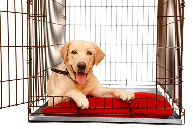 犬のケージ飼いはメリットがたくさん!しつけのコツからサイズの選び方まで