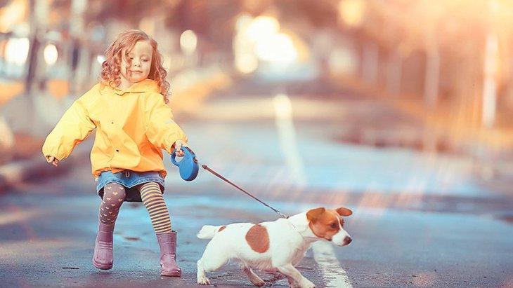犬のお散歩トラブルが起こりがちなシーン4選