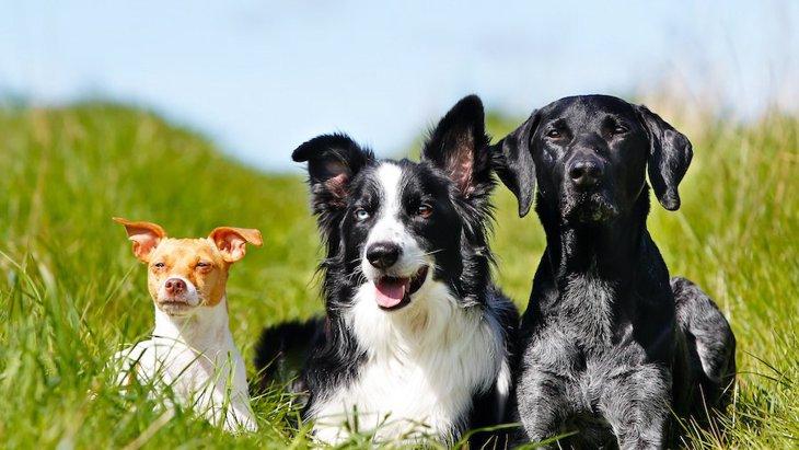 多頭飼いをする前に必要な準備と先住犬との会わせ方