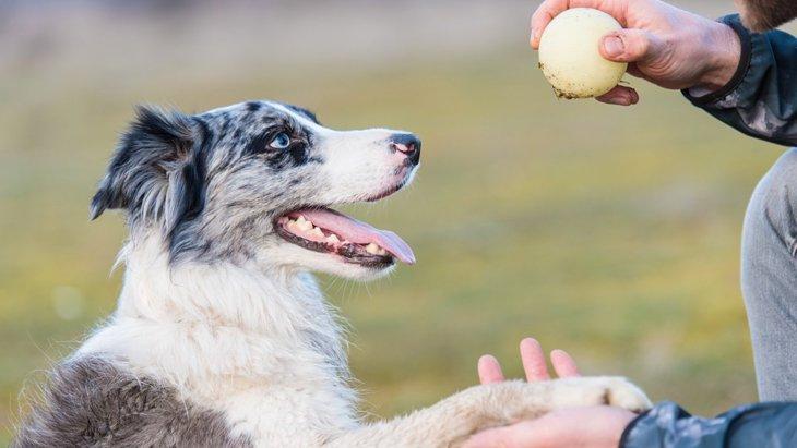 犬の『記憶のしくみ』を知って暮らしに活かす5つの応用