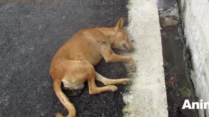 意識を失い路上で倒れている犬を救助…彼が目を覚ます日は来るのか?