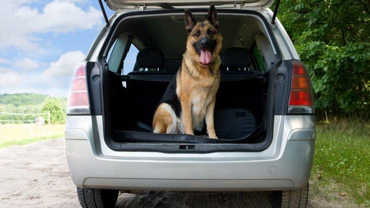 車に付いた犬の臭いを消す3つの方法とやりたい対策