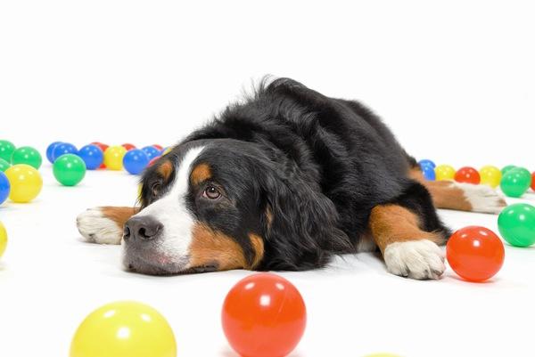 赤ちゃんと犬を一緒に育てるときのメリット・デメリット。安心な犬種と注意すべき病気