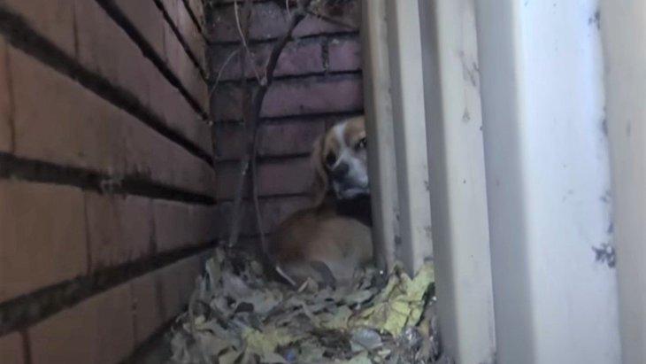 小学校に捨てられた小型犬は、物陰に隠れて震えていた