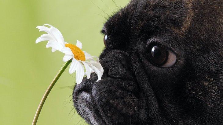 犬は『家族の匂い』を嗅ぐとポジティブになるという調査結果