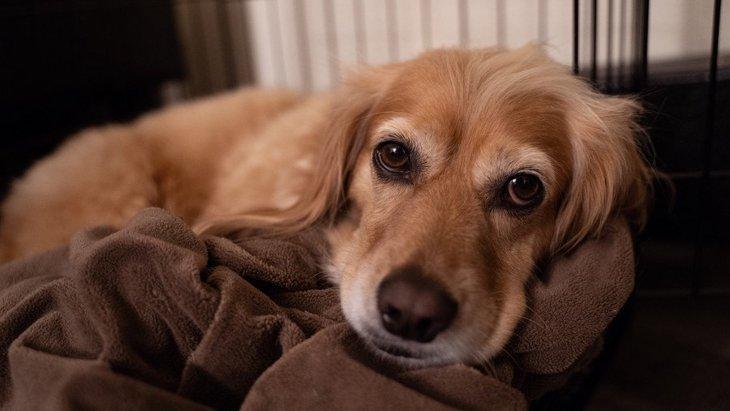 保護犬を迎えた時、何をすればいいのか整理してみた!
