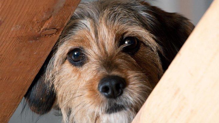犬に構ってはいけない『絶対NGタイミング』5選