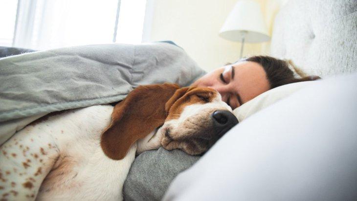 犬が『一緒に寝たい』と飼い主を誘っている時の仕草や行動4選