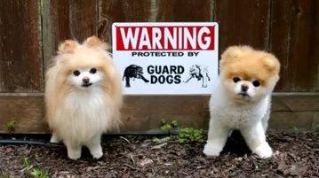 本当に怖い?番犬注意なワンちゃん達