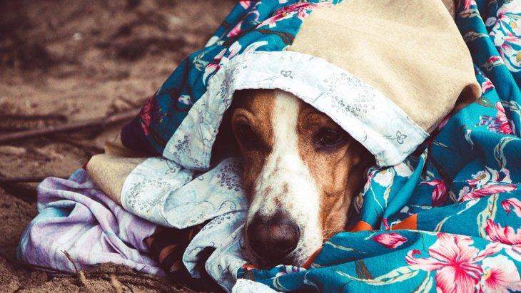 犬が前足で「もみもみ」する3つの心理
