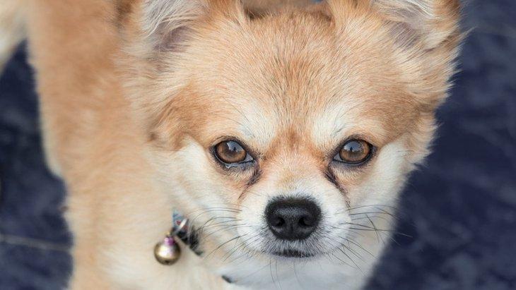 犬の涙やけを取る方法とは?原因から紐解く解消法
