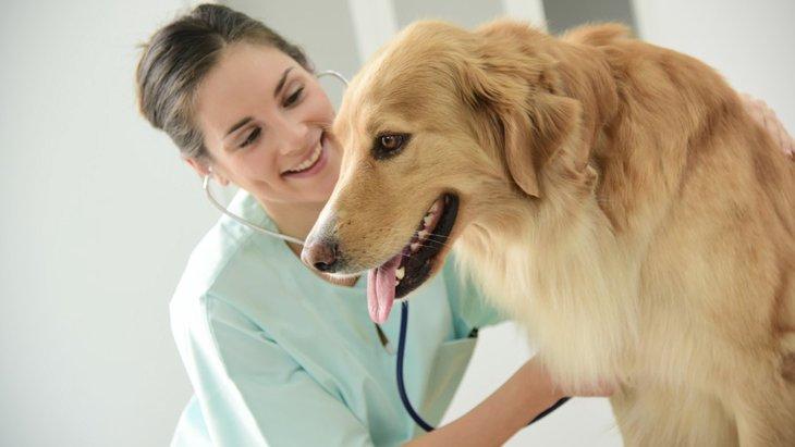 わんこの病気は早期発見・早期治療が大事!犬の健康診断のすすめ