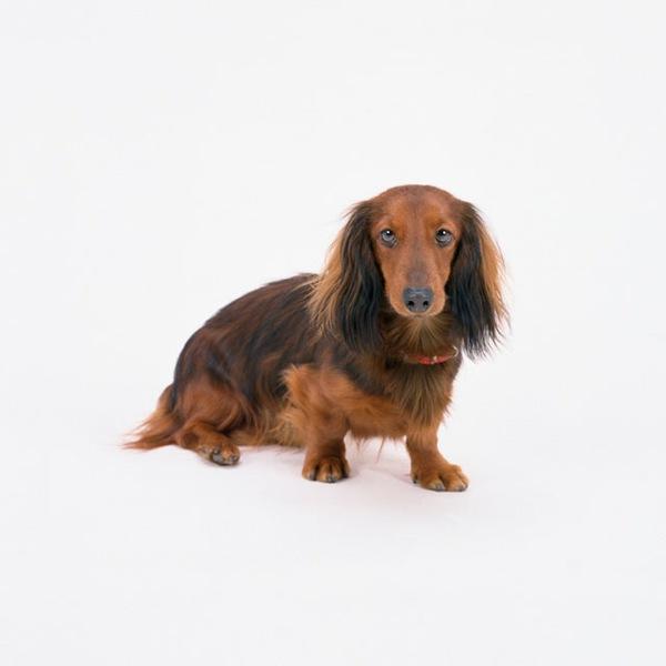犬の名前!おすすめリスト