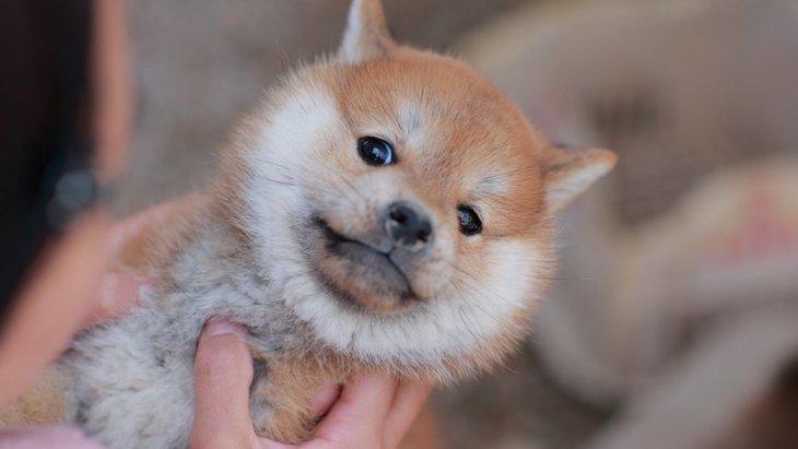 犬が『抱っこ』されるのを嫌がる時の理由5つ!無理やり抱っこするのはNGです