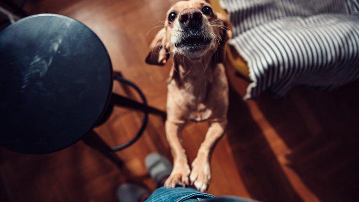 犬が飼い主の帰宅時に大喜びで飛びついてくる時の注意点