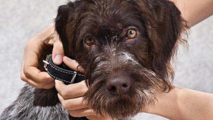 犬が首輪を嫌がる時の対処法3つ