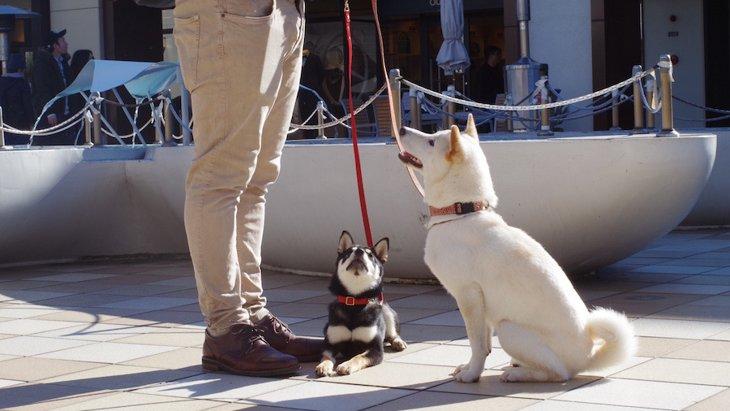 とってもキュート♡犬に教えられる可愛い芸4選
